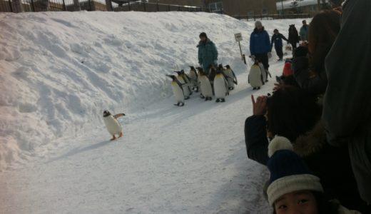 旭山動物園で子供ペンギンのお散歩を見てきた