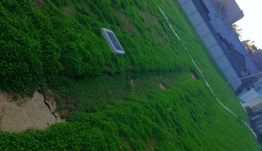 青山Francfrancの近くにクローバーが生い茂る空き地がある