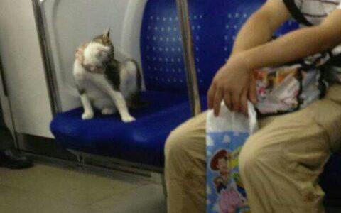 周知:上野の桜や銀座・新宿・池袋・新橋・の看板で猫が寝ているのは猫おじさんによる虐待
