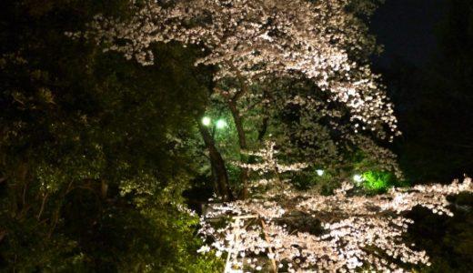 原宿東郷神社の夜桜が穴場