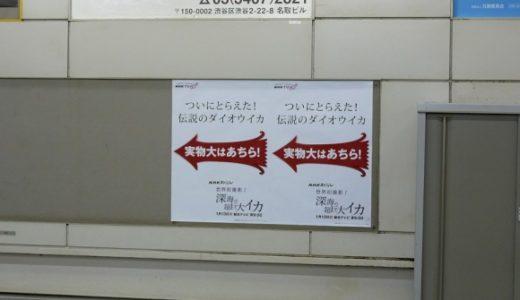 圧倒的じゃなイカ?!NHKの実物大ダイオウイカが渋谷駅に現る