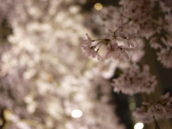 しだれ桜の花びら