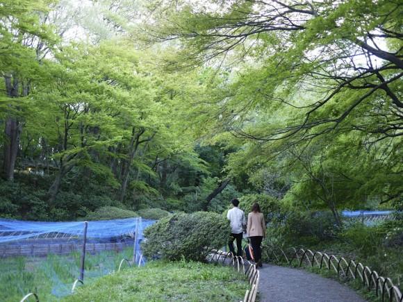明治神宮の菖蒲園