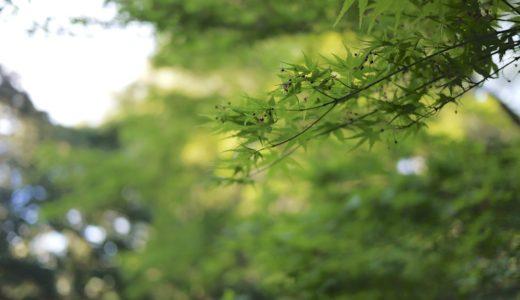 清正井:明治神宮のパワースポットは新緑に囲まれる湧水だった