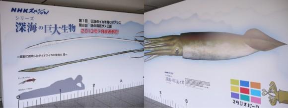 8mサイズのダイオウイカ看板
