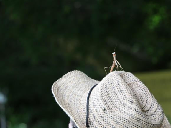 麦わら帽に乗るカマキリ
