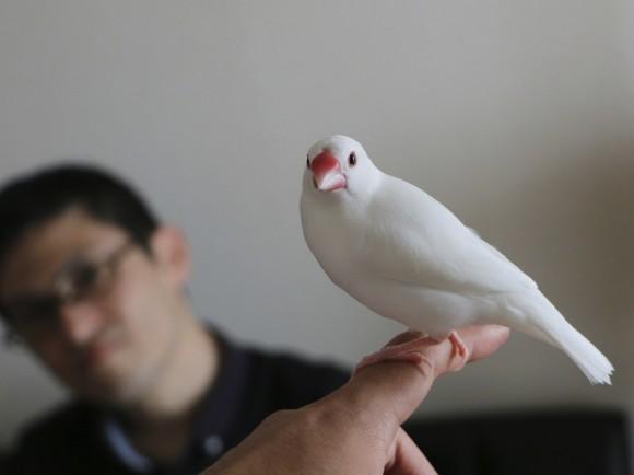 文鳥かわいいよ文鳥