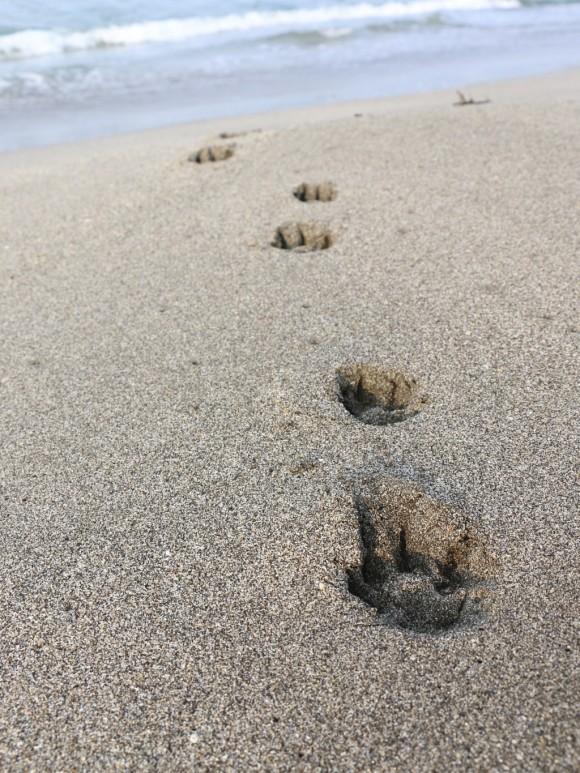 砂浜の足跡!