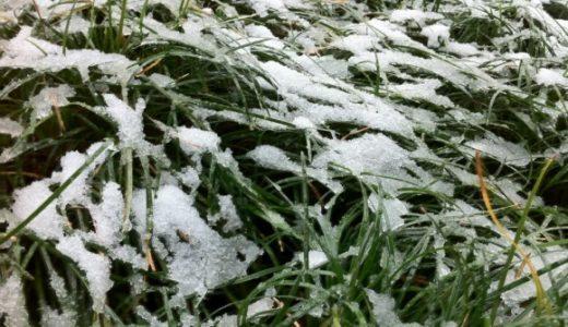 原宿・表参道にも雪が積もる