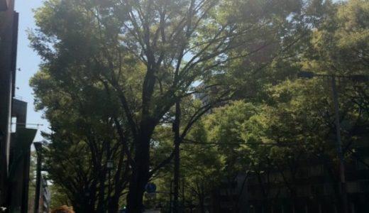 表参道のケヤキ並木が芽吹き始めた