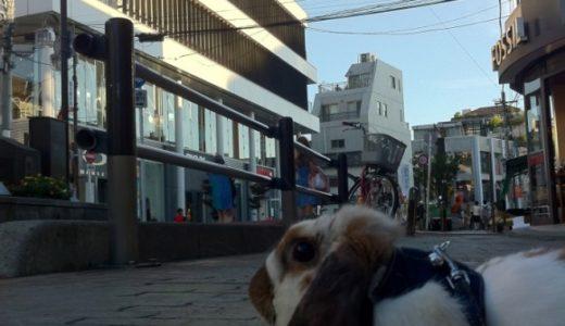 うさんぽ in 原宿キャットストリート