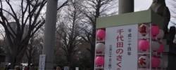靖国神社では千代田さくらまつりが開始していた