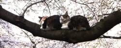 これが桜で寝ている猫
