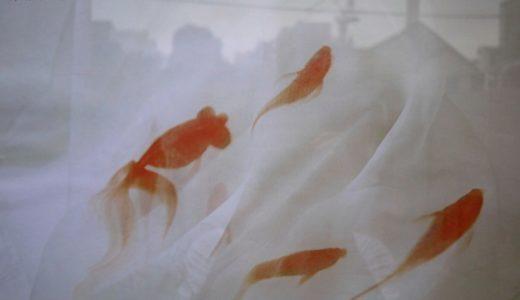 金魚アートの深堀隆介展示が表参道matohuで開催中。今月末まで
