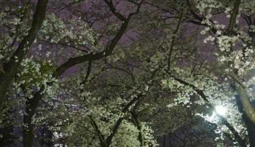 青山霊園の満開の夜桜で花見をする