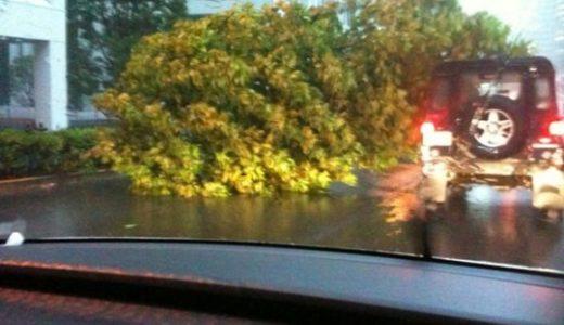 都内台風被害まとめ:青山通り/道玄坂/銀座で倒木、中央線/井の頭線で車掌が乗客を和ませる