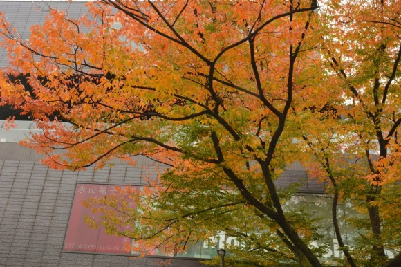 GYRE表参道前の紅葉