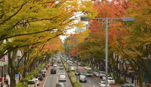 表参道のケヤキ並木の紅葉が見頃に