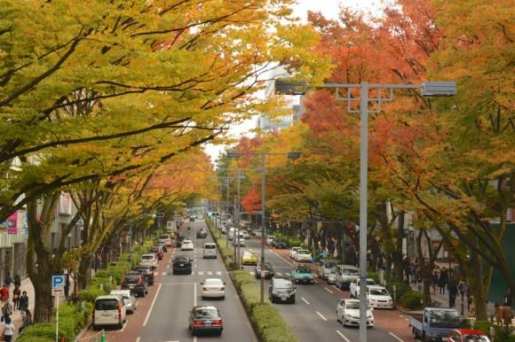 表参道の陸橋から見たケヤキ並木の紅葉