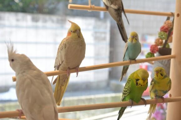 小鳥の大部屋