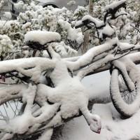 表参道の自転車