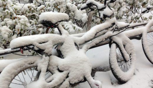 一方表参道の雪の様子を御覧ください。